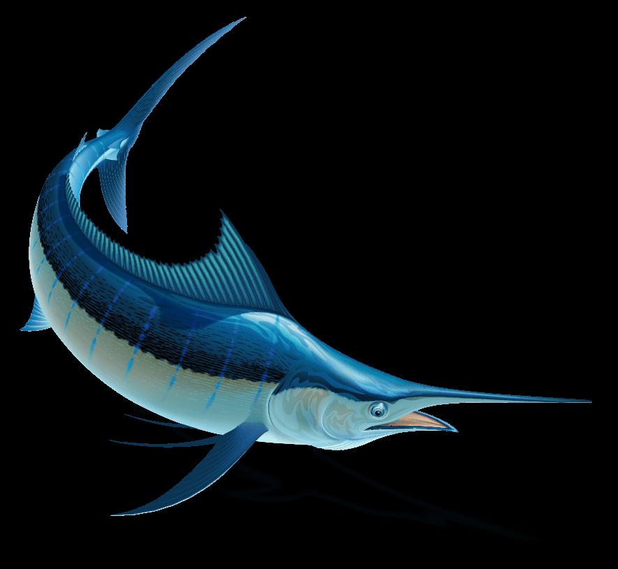 zahoransky-expedition-z-z-sailfin-fisch