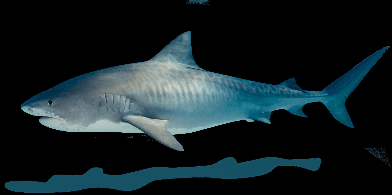 zahoransky-expedition-z-z-shark-hai2